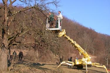 LIFE+Tagung am 01. März 2012 in Eningen - Praktische Demonstrationen zum Baumschnitt